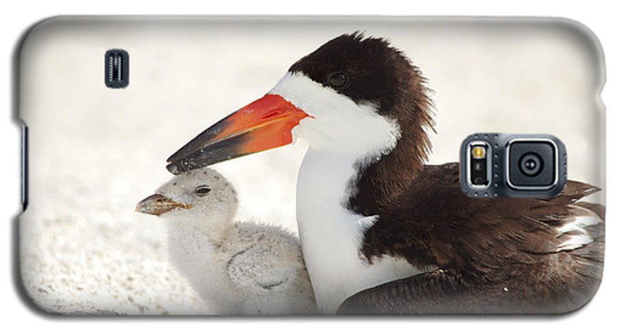 black Skimmers Skimmer Galaxy S5 Case featuring the photograph Family Time. by Evelyn Garcia