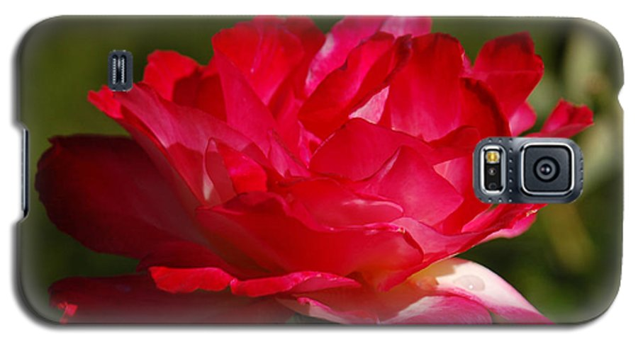 Floral Galaxy S5 Case featuring the photograph Fuchsia by Suzanne Gaff