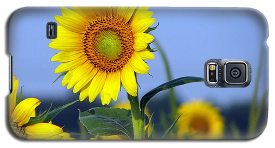 Sunflower Galaxy S5 Case featuring the photograph Getting To The Sun by Amanda Barcon