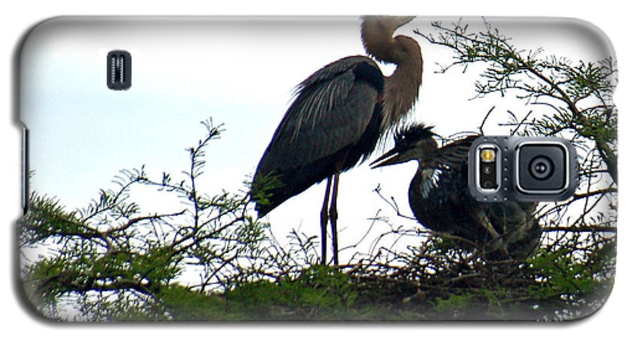 Blue Heron Galaxy S5 Case featuring the photograph Great Blue Heron With Fledglings II by Suzanne Gaff