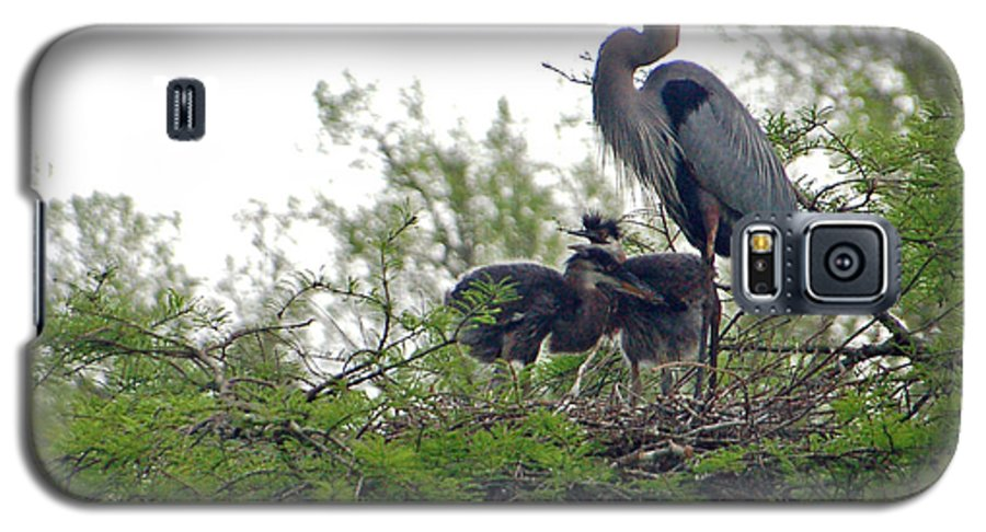 Great Blue Heron Galaxy S5 Case featuring the photograph Great Blue Heron With Fledglings by Suzanne Gaff