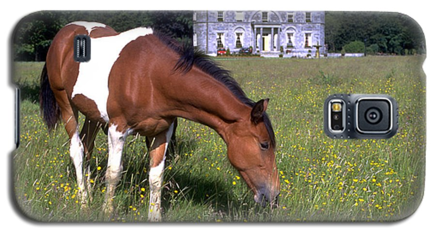 Horse Galaxy S5 Case featuring the photograph Horse Grazes Near St. Clerans by Carl Purcell