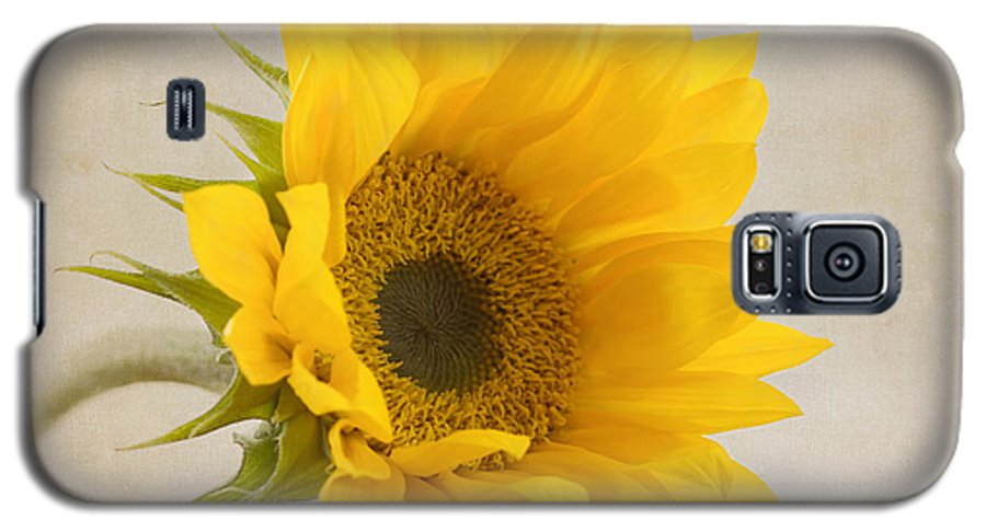 Sunflower Galaxy S5 Case featuring the photograph I See Sunshine by Kim Hojnacki