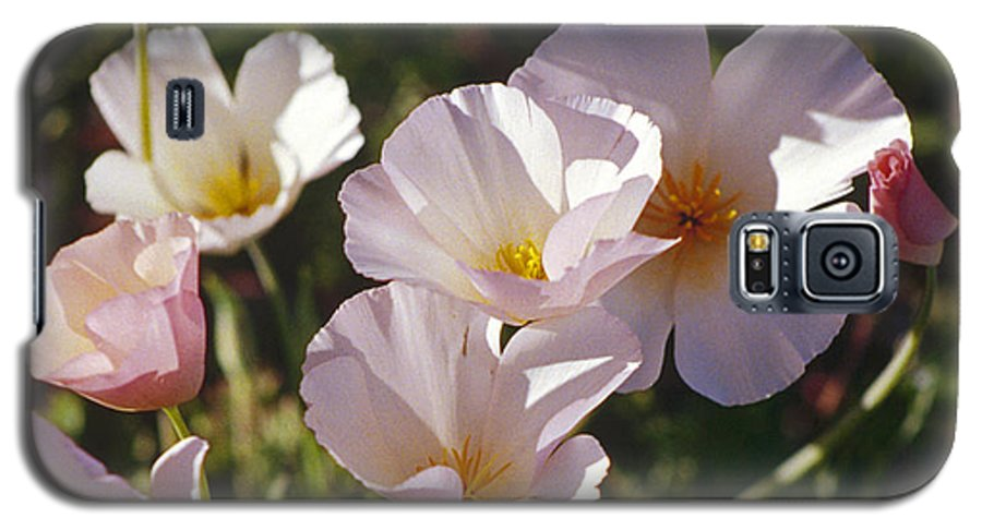 Flowers Galaxy S5 Case featuring the photograph Icelandic Poppies by Kathy McClure