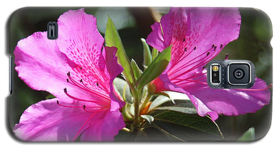 Azalea Galaxy S5 Case featuring the photograph In Full Bloom by Suzanne Gaff