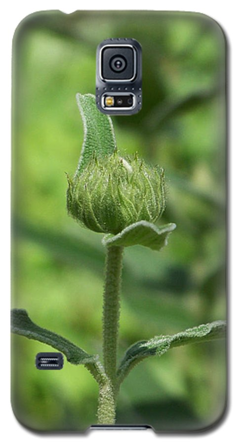 Plants Galaxy S5 Case featuring the photograph Its A Green World by Kathy McClure
