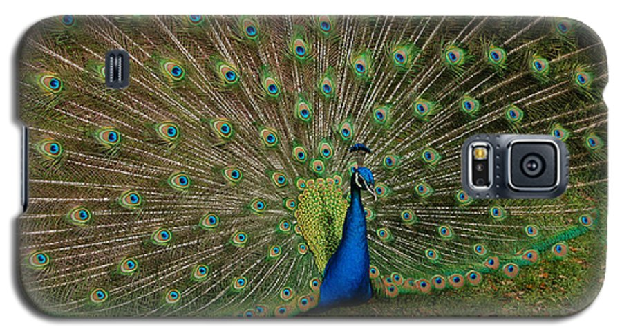 Peacock Galaxy S5 Case featuring the photograph Its All About Him by Suzanne Gaff