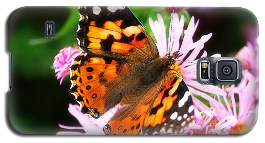 Flower Galaxy S5 Case featuring the photograph Late Summer Painted Lady by Marilyn Hunt