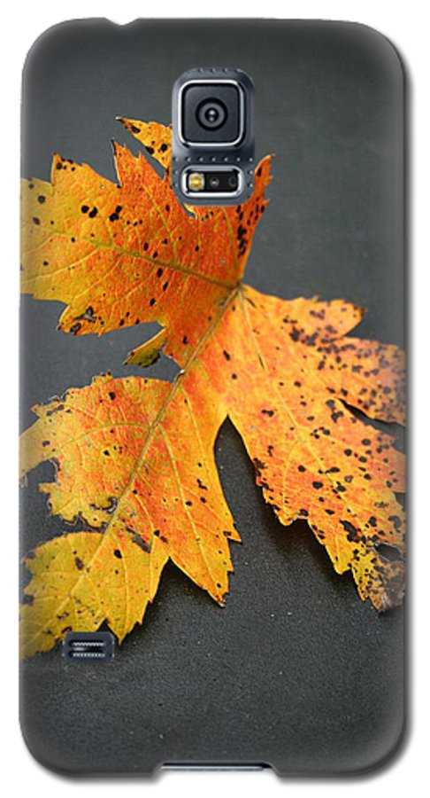 Nature Galaxy S5 Case featuring the photograph Leaf Portrait by Linda Sannuti
