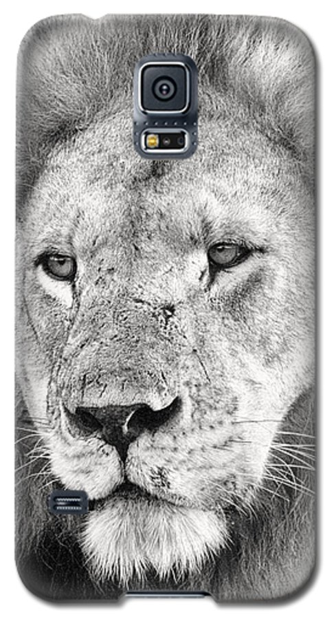 3scape Galaxy S5 Case featuring the photograph Lion King by Adam Romanowicz
