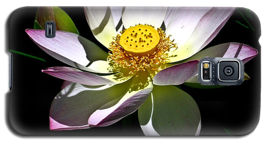 Lotus Galaxy S5 Case featuring the photograph Lotus Of The Night by Douglas Barnett