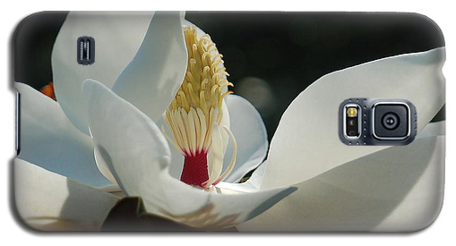 Magnolia Galaxy S5 Case featuring the photograph Magnolia Tiny Gem by Suzanne Gaff