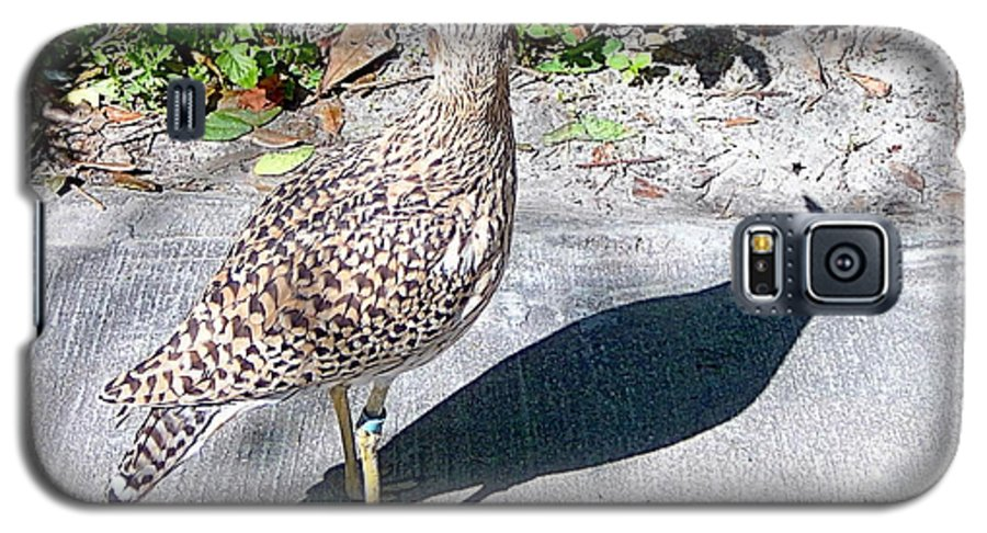 Birds Galaxy S5 Case featuring the photograph Me And My Shadow by Heather Morris