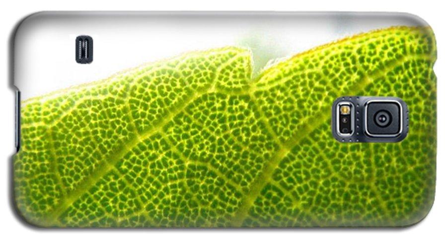 Leaf Galaxy S5 Case featuring the photograph Micro Leaf by Rhonda Barrett