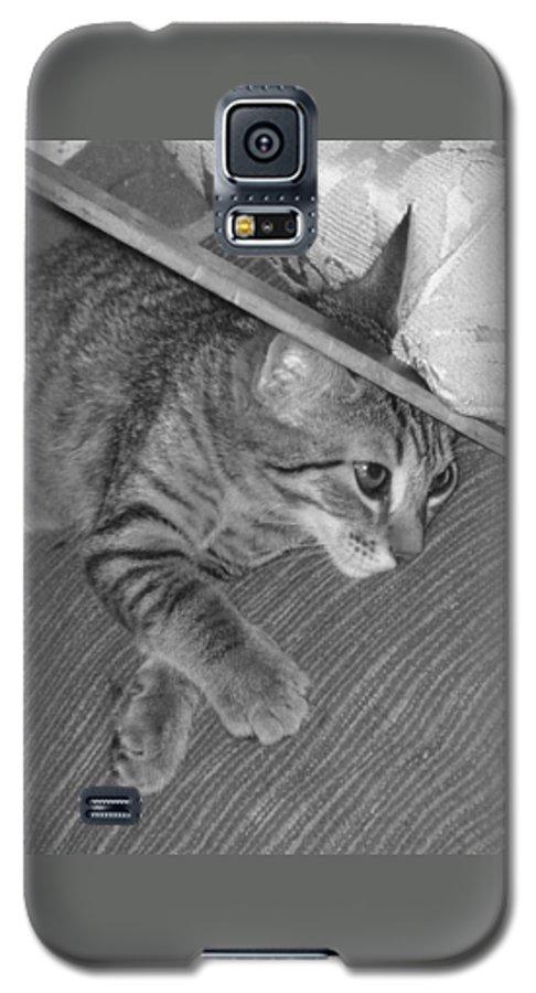 Kitten Galaxy S5 Case featuring the photograph Model Kitten by Pharris Art