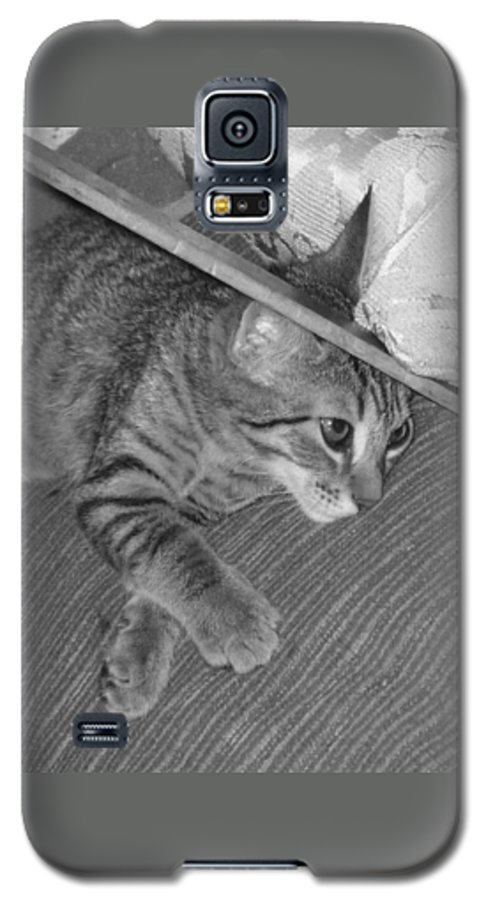 Kitten Galaxy S5 Case featuring the photograph Model Kitten by Pharris Art