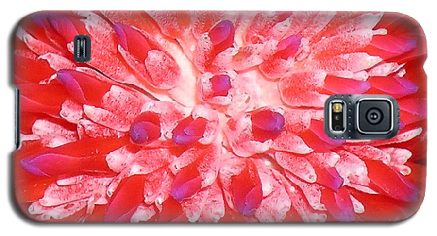 Hawaii Iphone Cases Galaxy S5 Case featuring the photograph Molokai Bromeliad by James Temple
