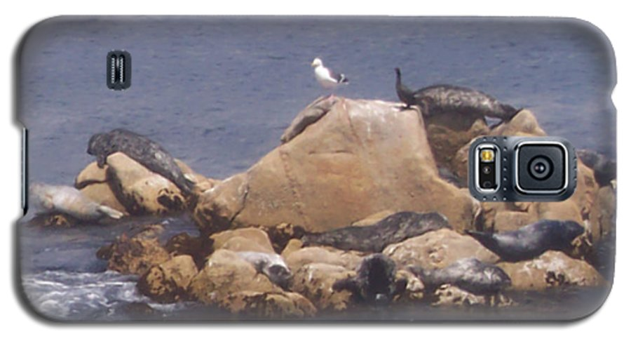 Seal Galaxy S5 Case featuring the photograph Monterey Sun Bath by Pharris Art