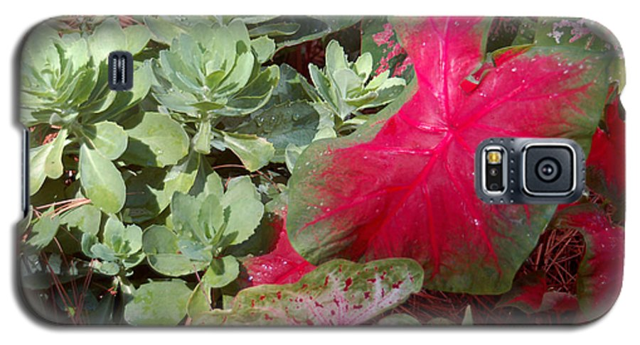 Caladium Galaxy S5 Case featuring the photograph Morning Rain by Suzanne Gaff