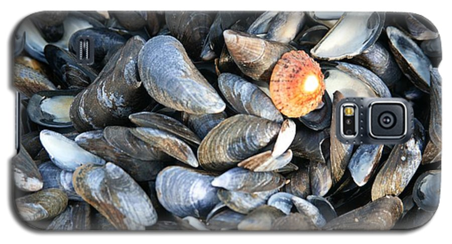 Shells Galaxy S5 Case featuring the photograph Odd Man Out by Christopher Rowlands