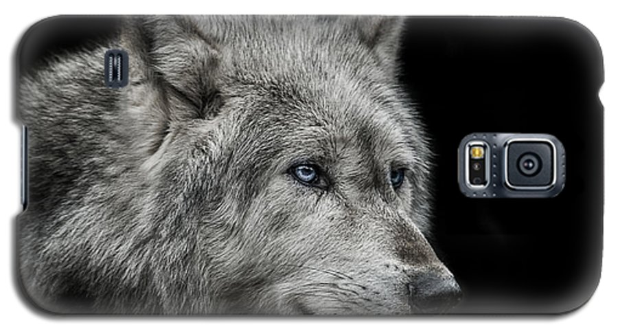 Wolf Galaxy S5 Case featuring the photograph Old Blue Eyes by Paul Neville