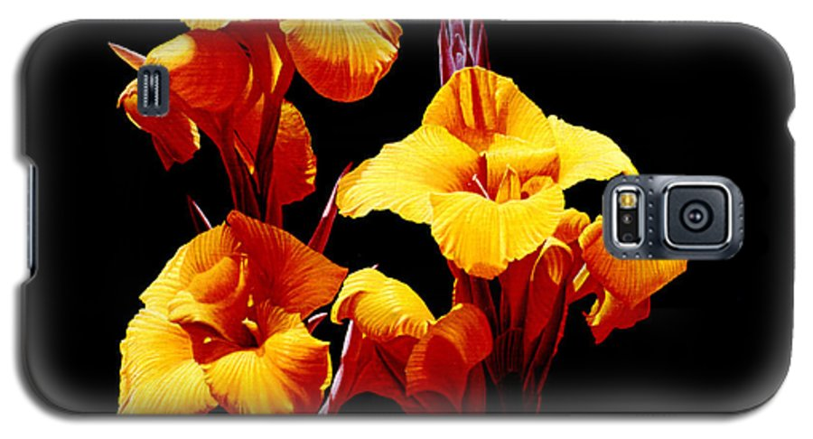 Yellow Cannas Galaxy S5 Case featuring the painting Orange Cannas by Gary Hernandez