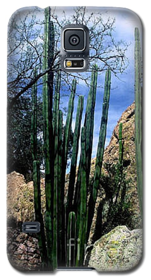 Cactus Galaxy S5 Case featuring the photograph Organ Pipe by Kathy McClure