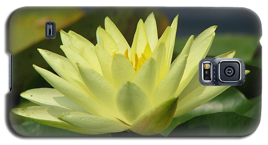Lillies Galaxy S5 Case featuring the photograph Peace by Amanda Barcon