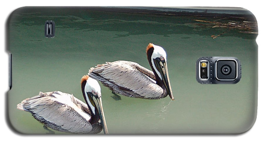 Brown Pelican Galaxy S5 Case featuring the photograph Pelicans Partners by Suzanne Gaff
