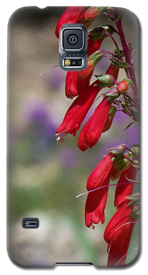 Flowers Galaxy S5 Case featuring the photograph Penstemon by Kathy McClure