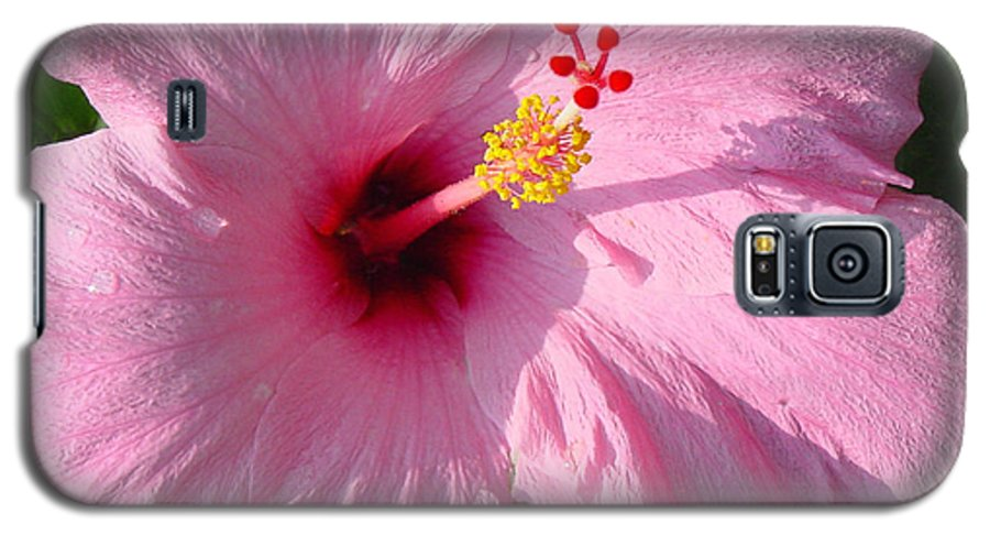 Pink Hibiscus Galaxy S5 Case featuring the photograph Pink Hibiscus by Suzanne Gaff