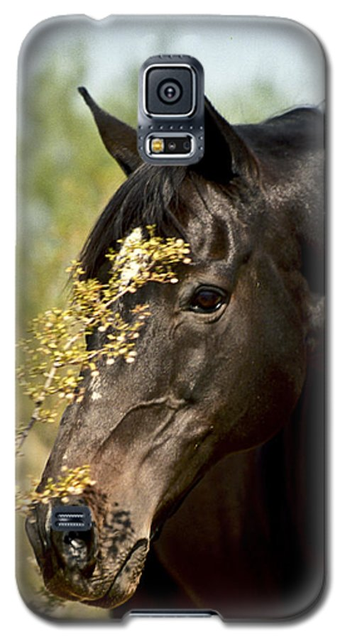 Horse Galaxy S5 Case featuring the photograph Portrait Of A Thoroughbred by Kathy McClure