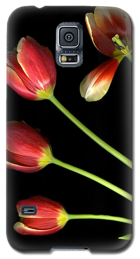 Scanography Galaxy S5 Case featuring the photograph Pot Of Tulips by Christian Slanec