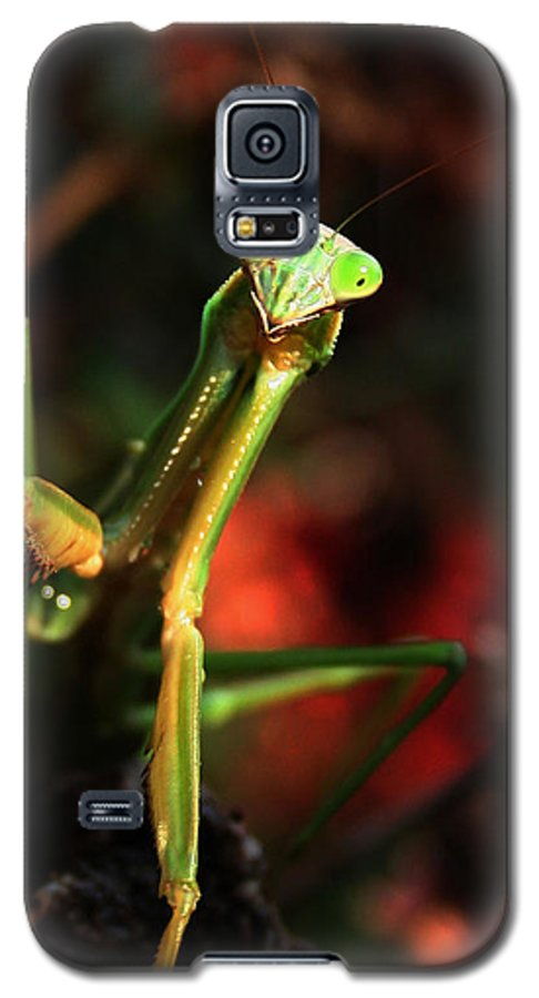 Praying Mantis Galaxy S5 Case featuring the photograph Praying Mantis Portrait by Linda Sannuti