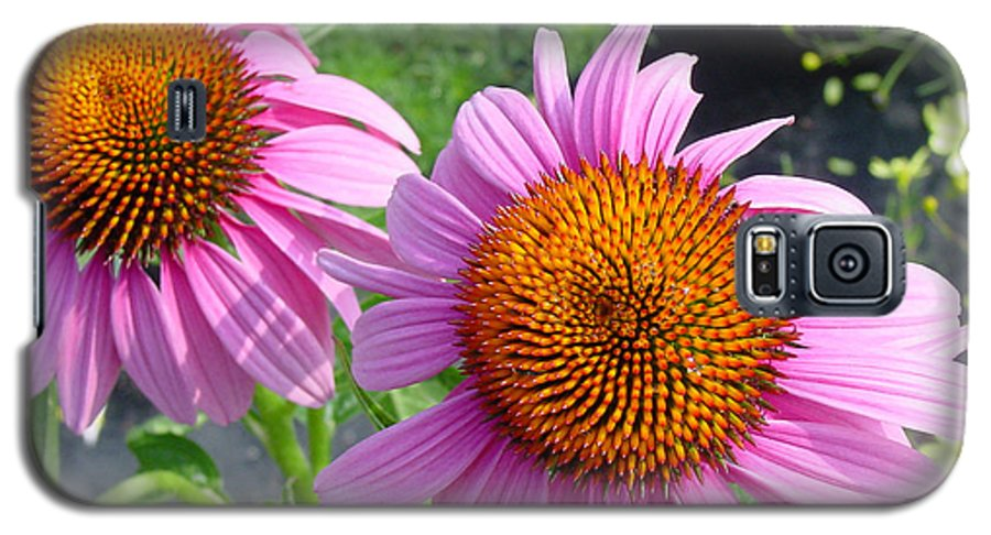 Flower Galaxy S5 Case featuring the photograph Purple Coneflowers by Suzanne Gaff