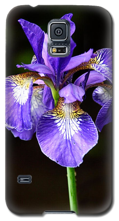 3scape Galaxy S5 Case featuring the photograph Purple Iris by Adam Romanowicz