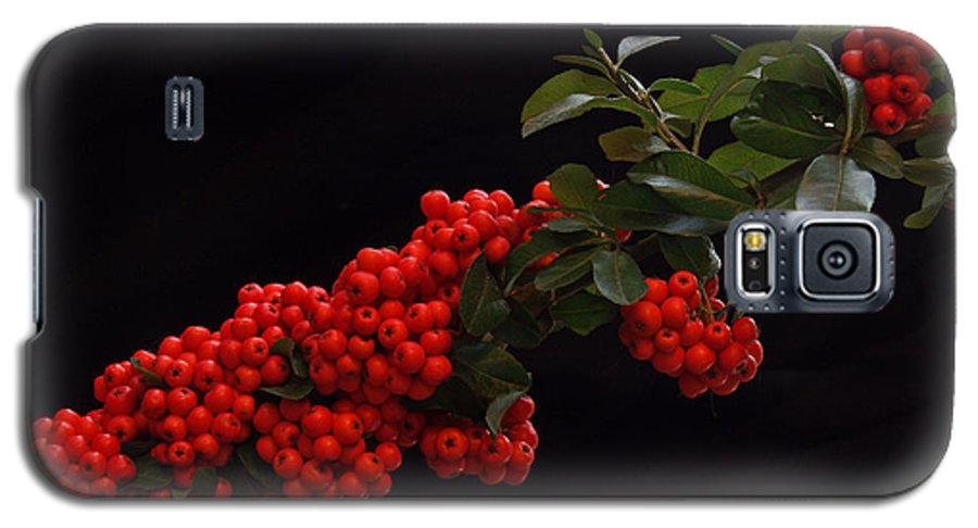 Winter Galaxy S5 Case featuring the photograph Pyracantha Berries On Black - Pennsylvania by Anna Lisa Yoder