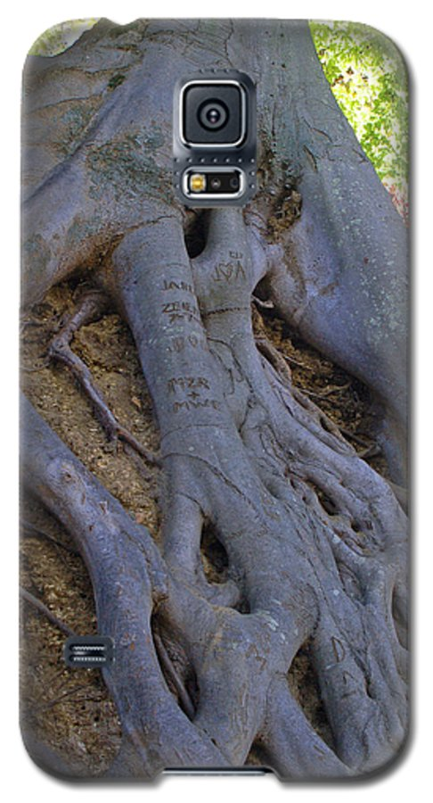 Tree Galaxy S5 Case featuring the photograph Roots by Suzanne Gaff