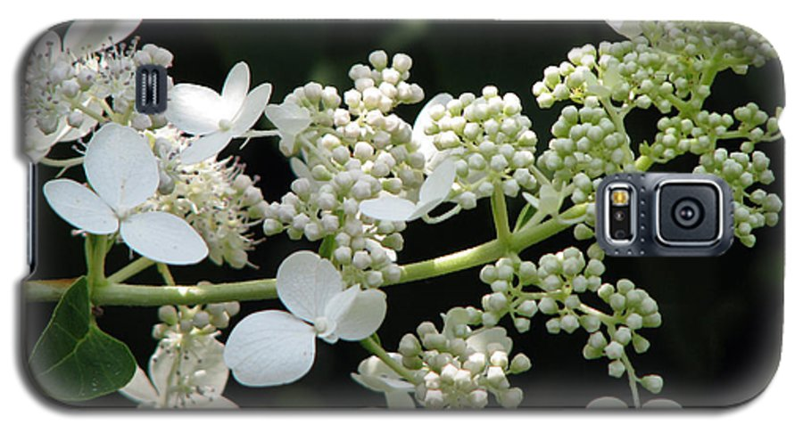 Hydrangea Galaxy S5 Case featuring the photograph Simply by Amanda Barcon