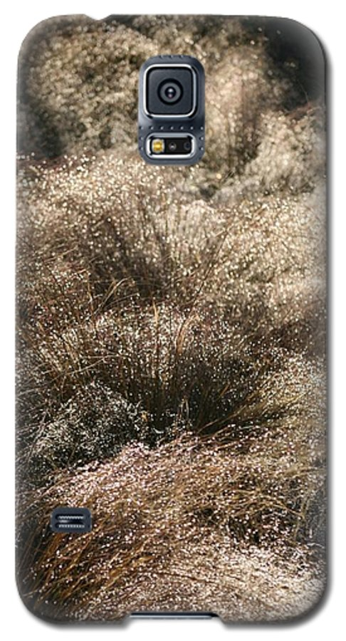 Grasses Galaxy S5 Case featuring the photograph Sparkling Grasses by Nadine Rippelmeyer