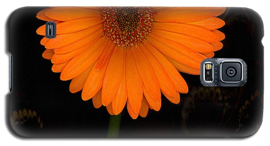 Gerbera Daisy Galaxy S5 Case featuring the photograph Standing Tall by Suzanne Gaff