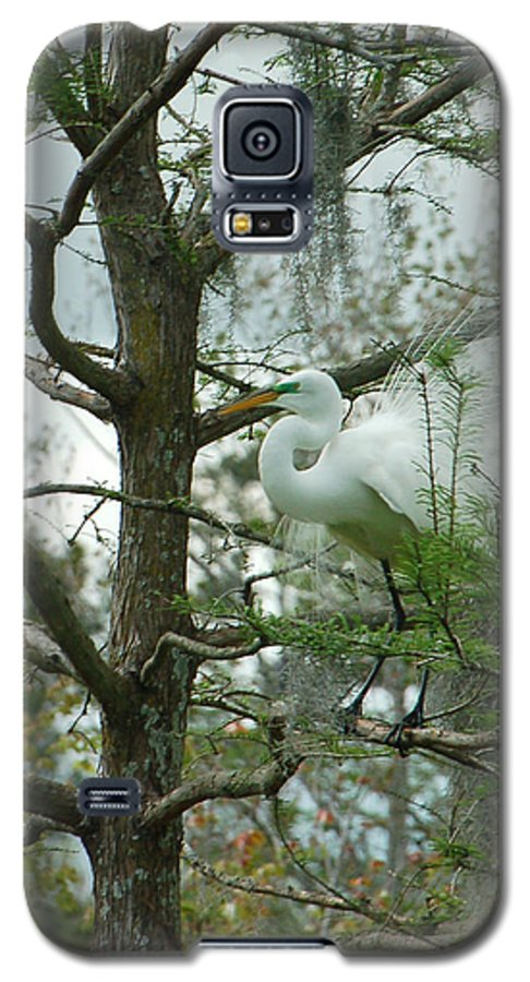 Egret Galaxy S5 Case featuring the photograph The Mating Dance by Suzanne Gaff
