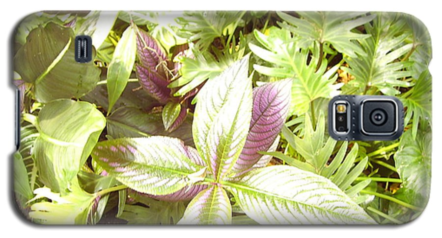Outdoors Galaxy S5 Case featuring the photograph Tropical by Heather Morris