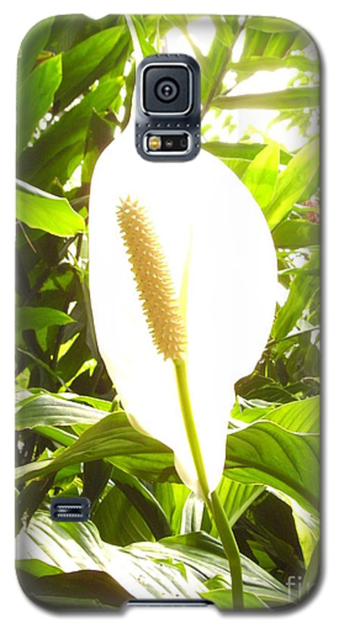 Tropical Galaxy S5 Case featuring the photograph Untitled by Heather Morris