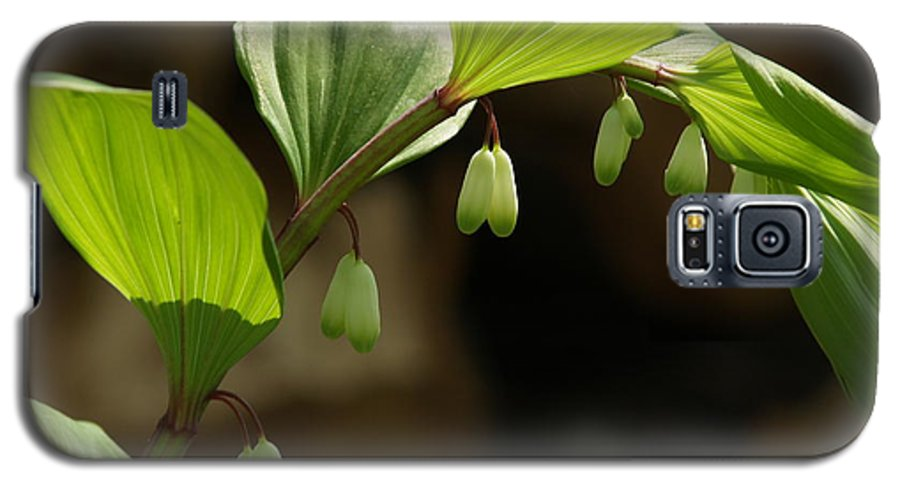 Solomon's Seal Galaxy S5 Case featuring the photograph Variegated Solomon's Seal In Spring - Pennsylvania by Anna Lisa Yoder