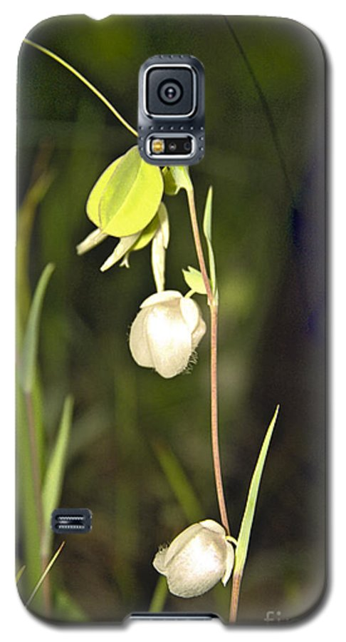 Wildflowers; Globes; Nature; Green; White Galaxy S5 Case featuring the photograph Whispers by Kathy McClure
