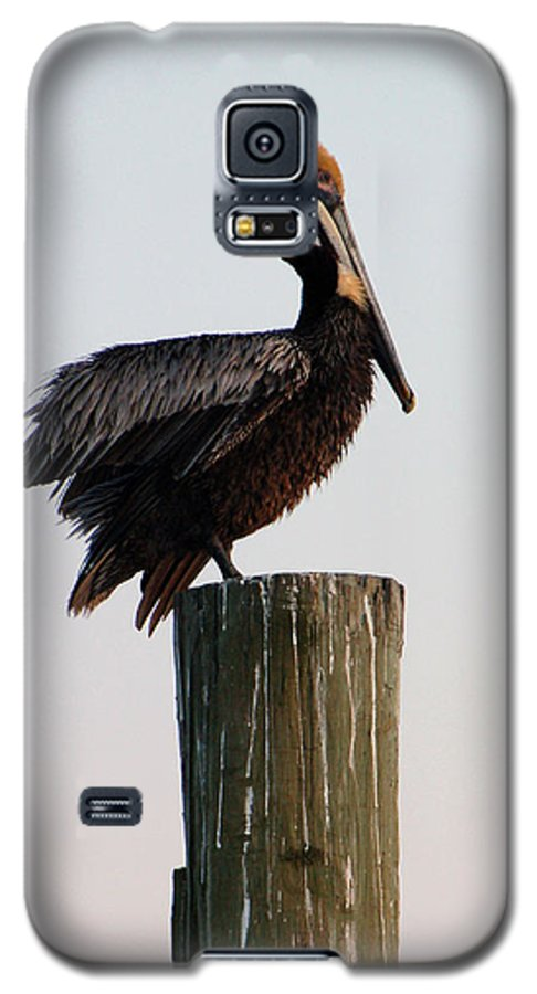 Brown Pelican Galaxy S5 Case featuring the photograph Will This Pose Do by Suzanne Gaff