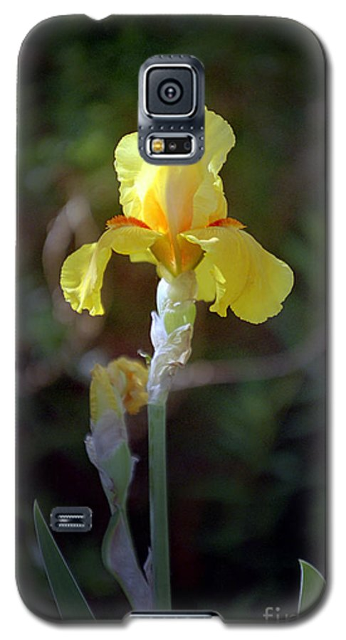 Iris Galaxy S5 Case featuring the photograph Yellow Iris by Kathy McClure