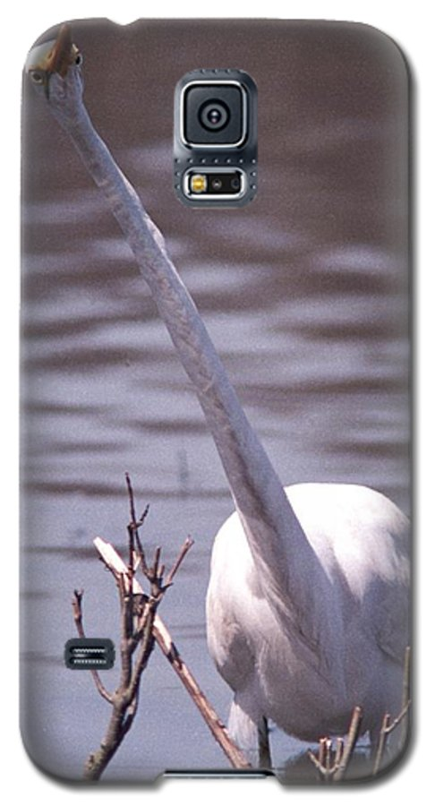 Egret Galaxy S5 Case featuring the photograph 070406-9 by Mike Davis