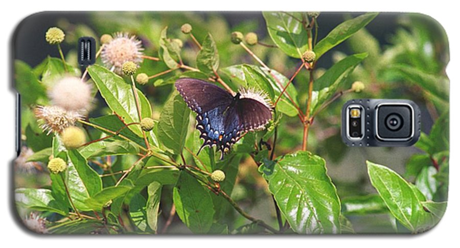 Butterfly Galaxy S5 Case featuring the photograph 080706-6 by Mike Davis